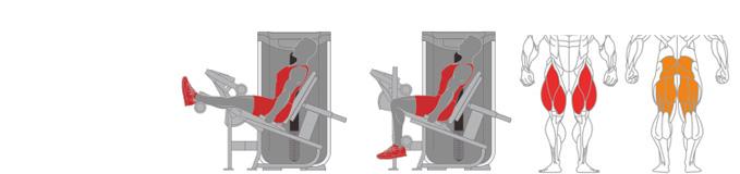 Máy ngồi móc đùi sau Plus X J300 - 11
